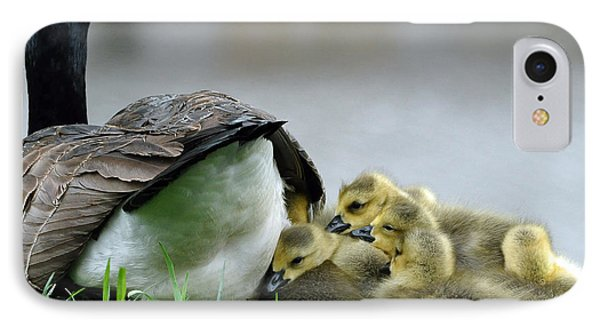Mama And Goslings IPhone Case by Lisa Phillips