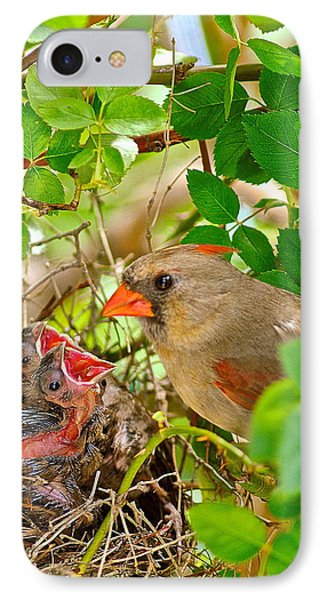 Mama Bird Phone Case by Frozen in Time Fine Art Photography