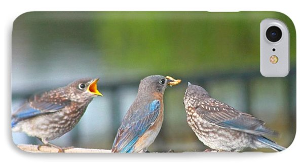Mama Bluebird And Fledglings IPhone Case by Jeanne Kay Juhos