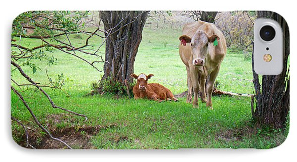 Mama Cow And Calf IPhone Case