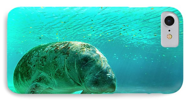 Manatee Swimming In Clear Water IPhone Case by James White