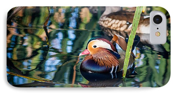 Mandarin Duck Reflections IPhone Case by Peta Thames
