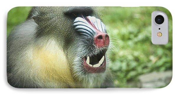 Mandrill IPhone Case by Rich Collins