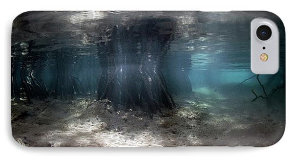 Mangrove Swamp IPhone Case by Ethan Daniels