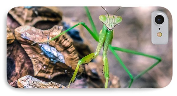IPhone Case featuring the photograph Mantis On A Pine Cone by Rob Sellers