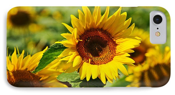 Many Sunflowers Only Two Bees IPhone Case by Mike Martin