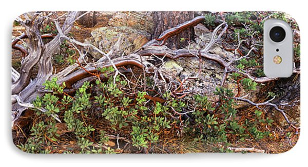 Manzanita Clings To Life IPhone Case by Panoramic Images