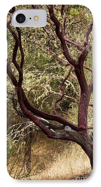 Manzanita Tree IPhone Case by Suzanne Luft