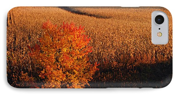 Maple And Cornfield At Dawn Phone Case by Larry Ricker