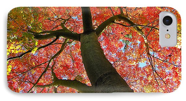 IPhone Case featuring the photograph Maple In Autumn Glory by Sean Griffin