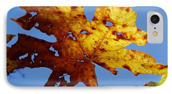 Maple Leaf On A Blue Sky IPhone Case by Peter Mooyman