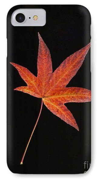 Maple Leaf On Black 2 IPhone Case by Sharon Talson