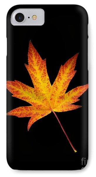 Maple Leaf On Black IPhone Case by Sharon Talson