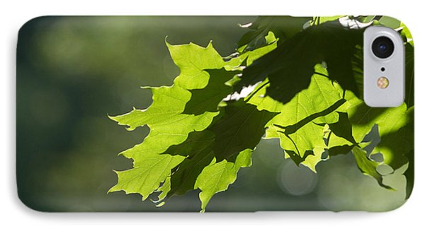 Maple Leaves In Summer IPhone Case