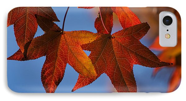 IPhone Case featuring the photograph Maple Leaves In The Fall by Stephen Anderson