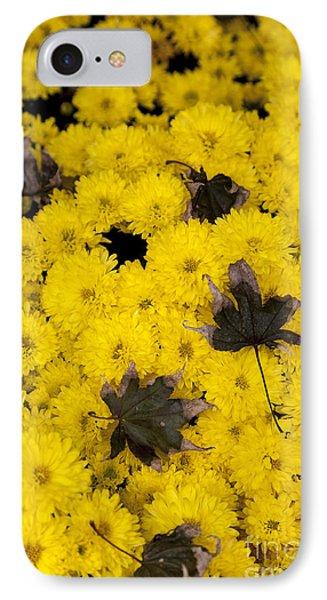 Maple Leaves On Chrysanthemum IPhone Case