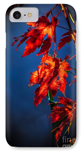 Maple Leaves Shadows IPhone Case by Robert Bales