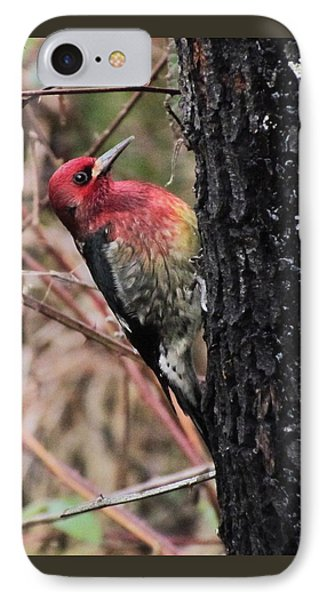 IPhone Case featuring the photograph Maple Sap Time by I'ina Van Lawick