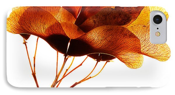 Maple Seed Pod Cluster IPhone Case