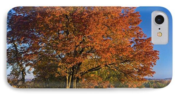 Maple Trees Phone Case by Brian Jannsen