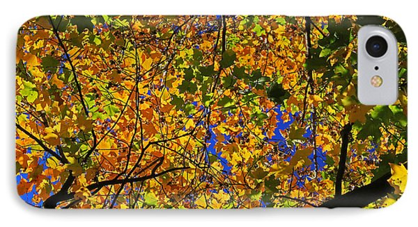 Maple View IPhone Case by Gary Kaylor