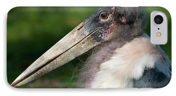 Marabou Stork IPhone Case by Nigel Downer