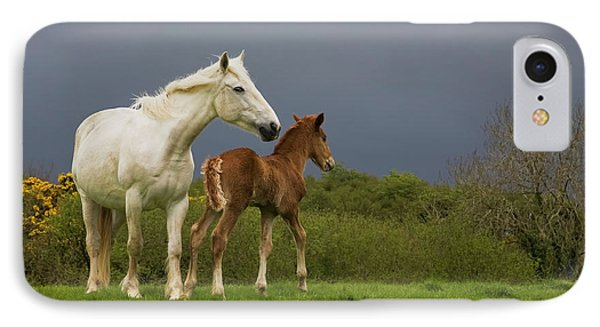 Mare And Foal, Co Derry, Ireland IPhone Case