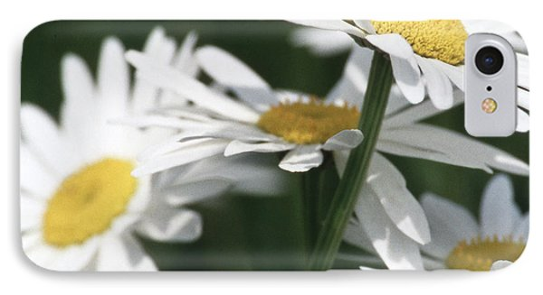 Marguerite Blossom IPhone Case