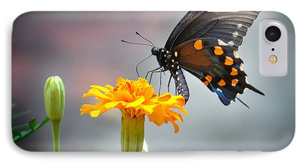 IPhone Case featuring the photograph Marigold Swallowtail  by Nava Thompson