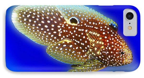 Marine Beta Fish Calloplesiops Altivelis IPhone Case by Wernher Krutein