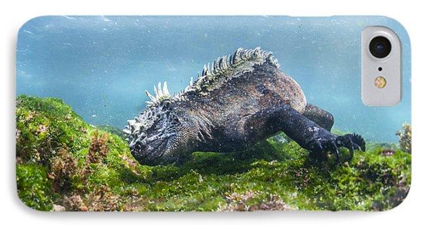 Marine Iguana Feeding On Algae Punta IPhone Case by Tui De Roy