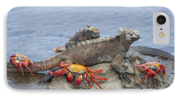 Marine Iguana Pair And Sally Lightfoot IPhone Case by Tui De Roy