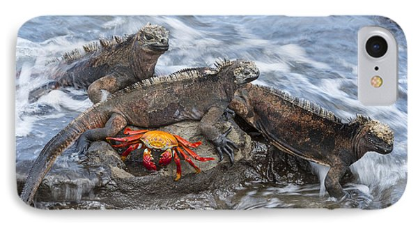 Marine Iguana Trio And Sally Lightfoot IPhone Case by Tui De Roy
