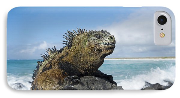 Marine Iguana Turtle Bay Santa Cruz IPhone Case by Tui De Roy
