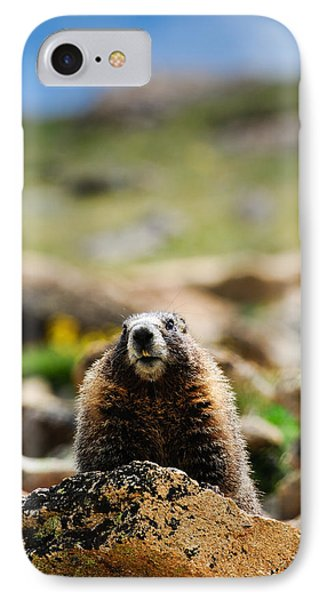 Marmot On A Rock IPhone Case by Bonnie Fink