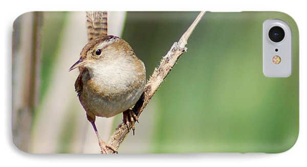 IPhone Case featuring the photograph Marsh Wren by Erin Kohlenberg