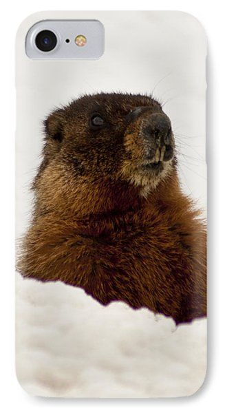 IPhone Case featuring the photograph Marty The Marmot by Daniel Hebard