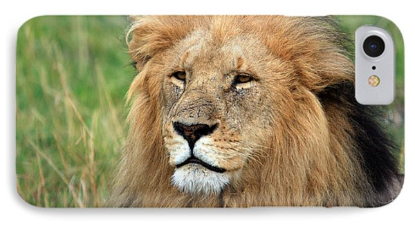 Masai Mara Lion Portrait    IPhone Case by Aidan Moran