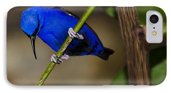 Masked Blue Bird Phone Case by Penny Lisowski