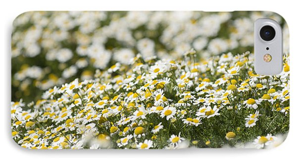 Masses Of Mayweed IPhone Case by Anne Gilbert