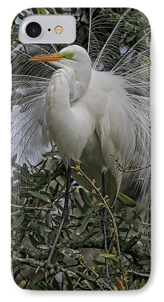Mating Plumage IPhone Case by Deborah Benoit