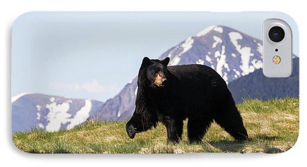 Mature Black Bear  Ursus Americanus IPhone Case by Doug Lindstrand