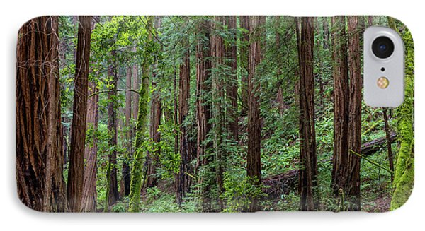 Mature Redwood Forest In Muir Woods IPhone Case