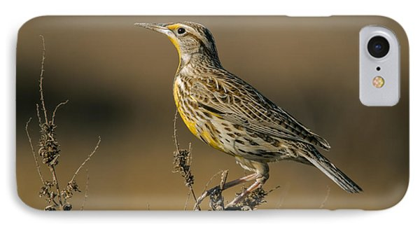 Meadowlark On Weed IPhone 7 Case by Robert Frederick