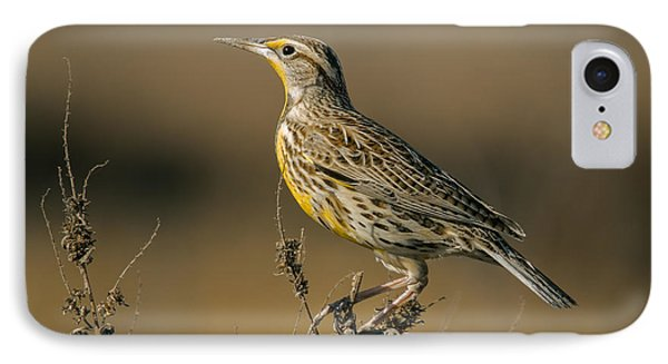 Meadowlark On Weed IPhone Case by Robert Frederick