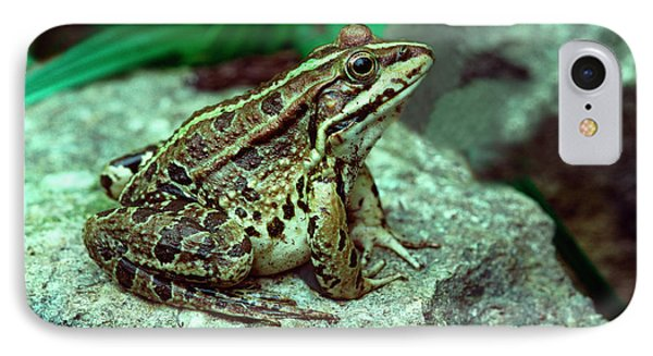 Mediterranean Painted Frog By A Pool IPhone Case by Nigel Downer