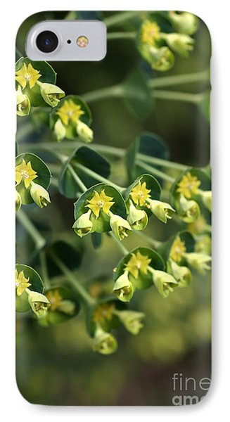 Mediterranean Spurge Phone Case by Joy Watson