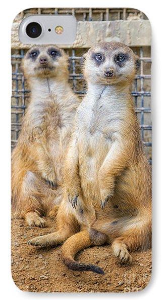 Meerkat Duo IPhone Case