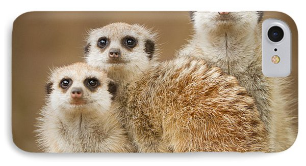 Meerkat Family IPhone Case by Craig Dingle