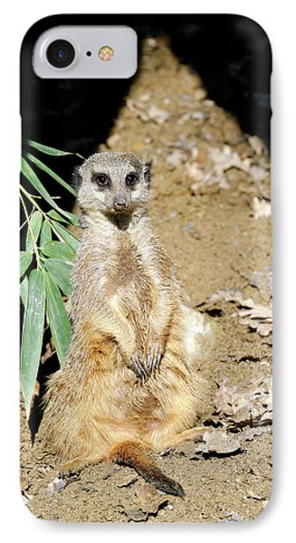 Meerkat iPhone 7 Case - Meerkat by Heiti Paves